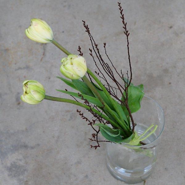 Französische Tulpen Bild 1
