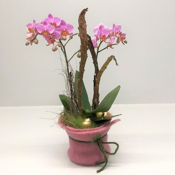 Orchidee im Filzmantel Bild 1