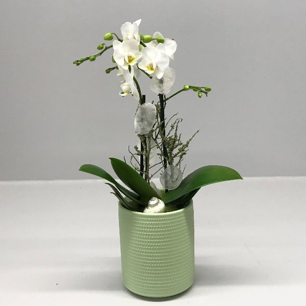 Orchidee in Keramik Bild 1