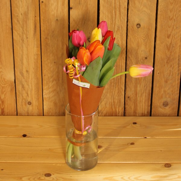 Tulpenbund Bild 1