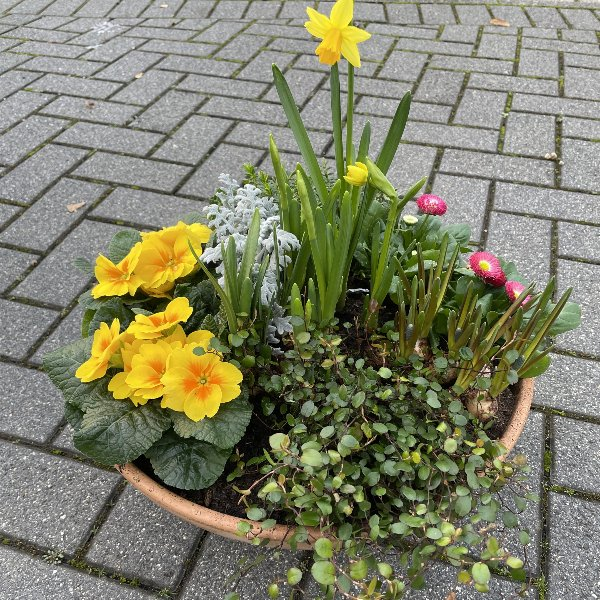 Frühlingserwachen Bild 1
