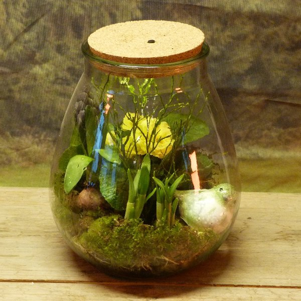 Ballonglas bepflanzt Bild 1
