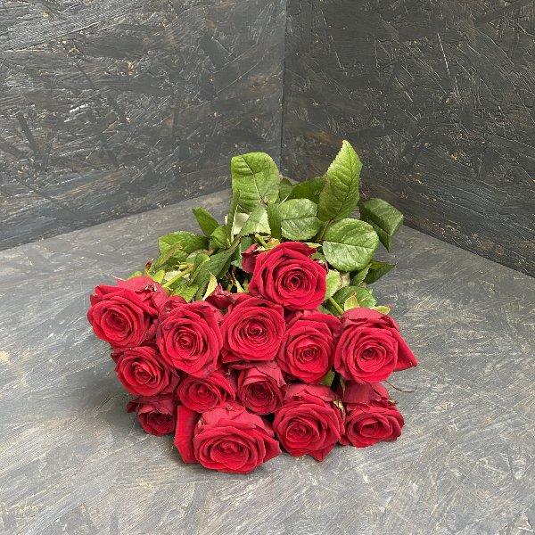 Rote Rose einzeln aufgebunden Bild 1