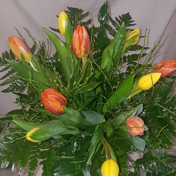 10 Tulpen Bild 1