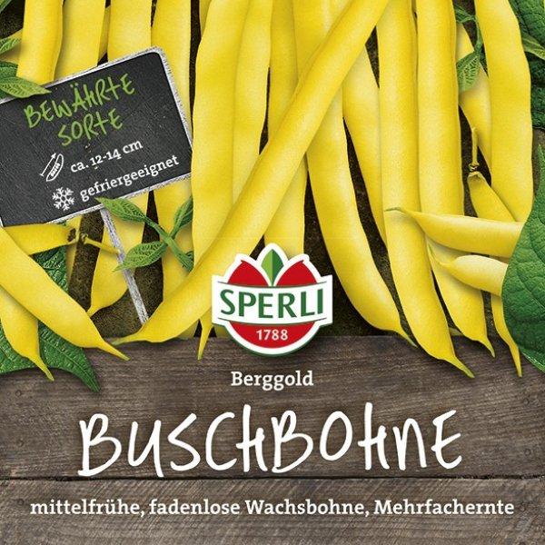 Wachs-Buschbohne Berggold Bild 1