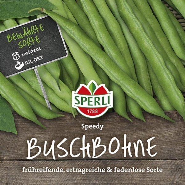 Buschbohne Speedy Bild 1