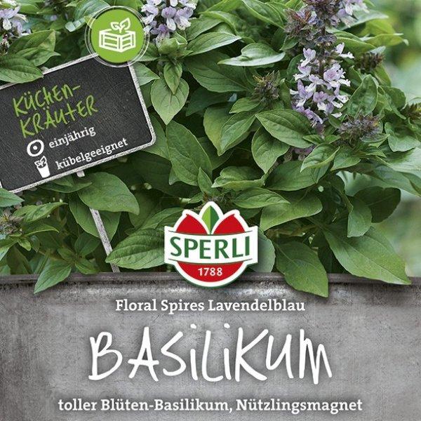 Basilikum Floral Spires Lavendelblau Bild 1