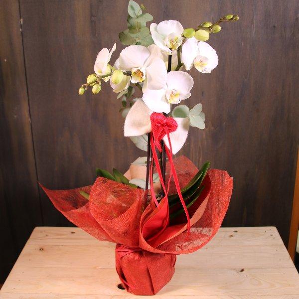Orchidee, dekoriert Bild 2