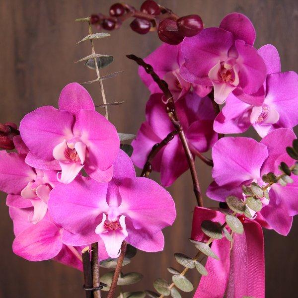 Orchidee, dekoriert Bild 3