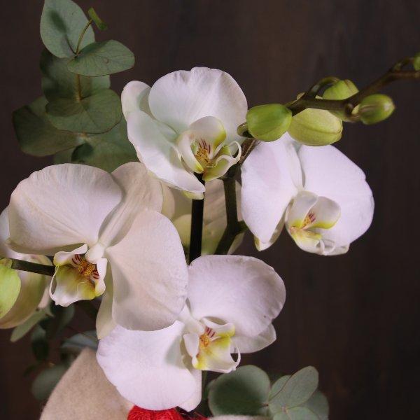 Orchidee, dekoriert Bild 4