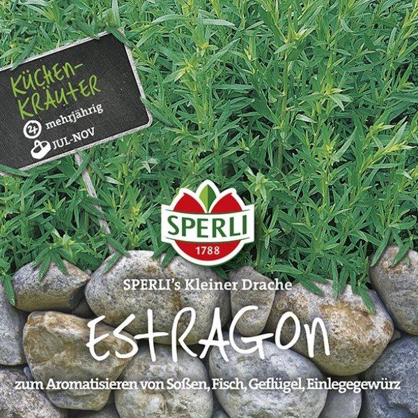 Estragon SPERLI's Kleiner Drache Bild 1