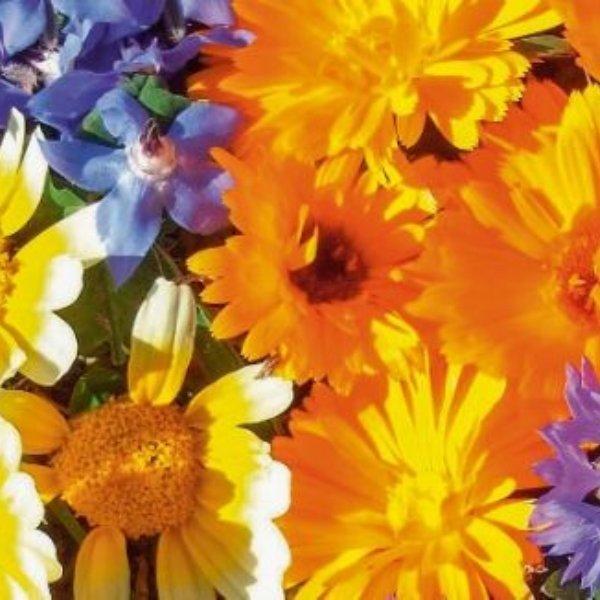 Essbare Blüten - Blütenmischung Bild 1