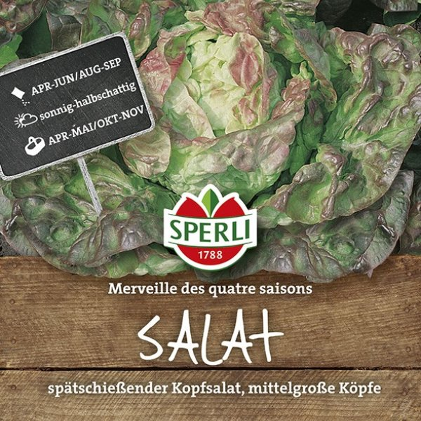 Kopfsalat Merveille des quatre saisons Bild 1