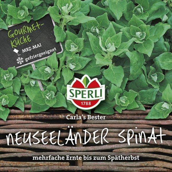 Neuseeländer Spinat Carlas Bester Bild 1