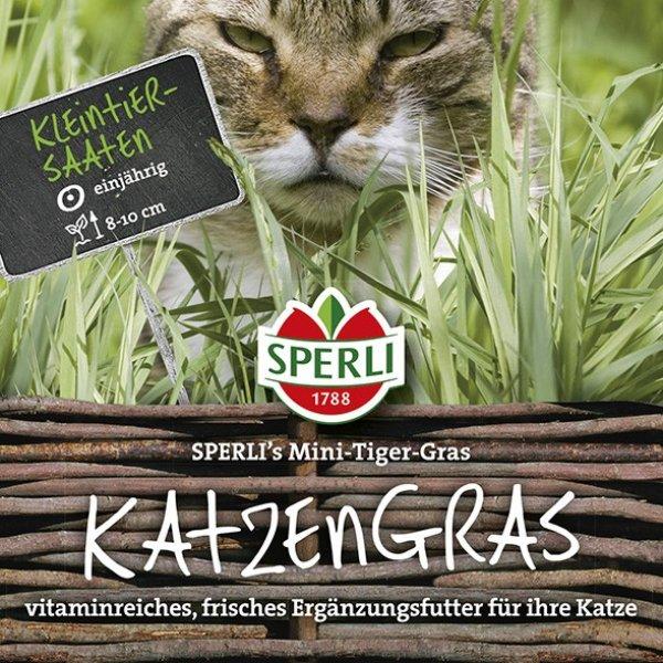 Katzengras SPERLI's Mini-Tiger-Gras Bild 1