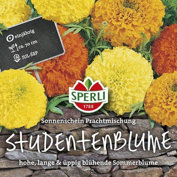 Studentenblumen Sonnenschein Prachtmischung Bild 1