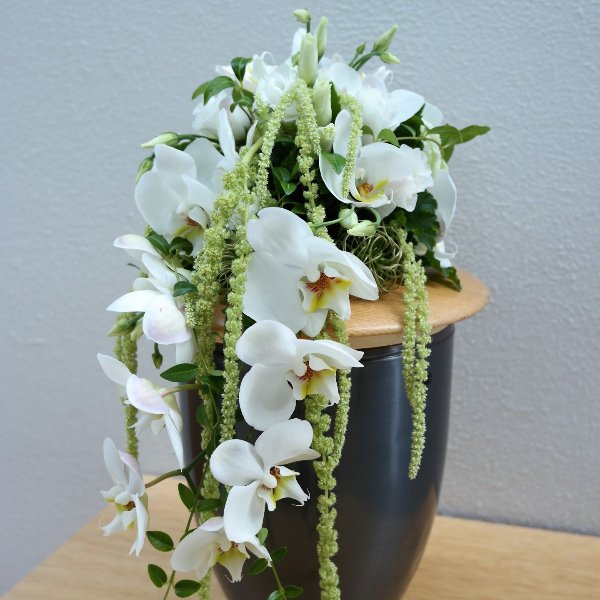 Orchideentraum Bild 1