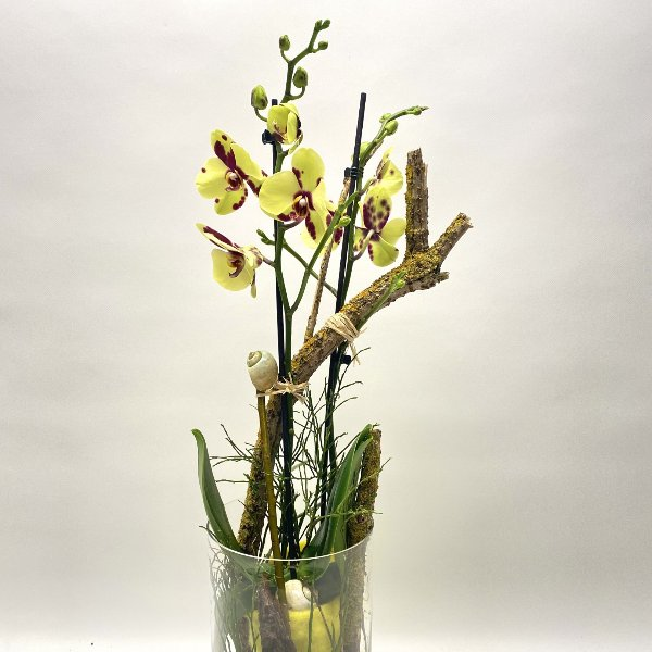 Orchidee im Frühling Bild 1