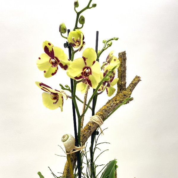 Orchidee im Frühling Bild 2