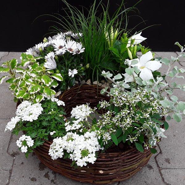 Pflanzkranz weisse Blumen Bild 1