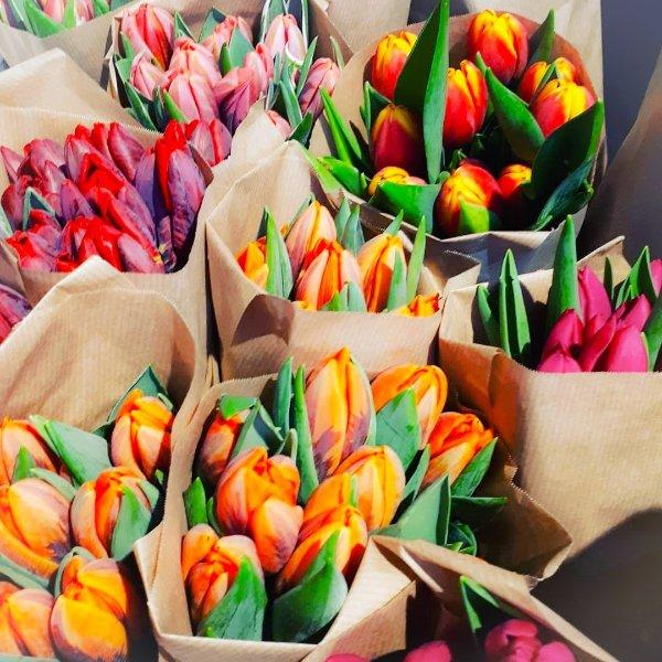 Tulpenbund 10er Bild 1