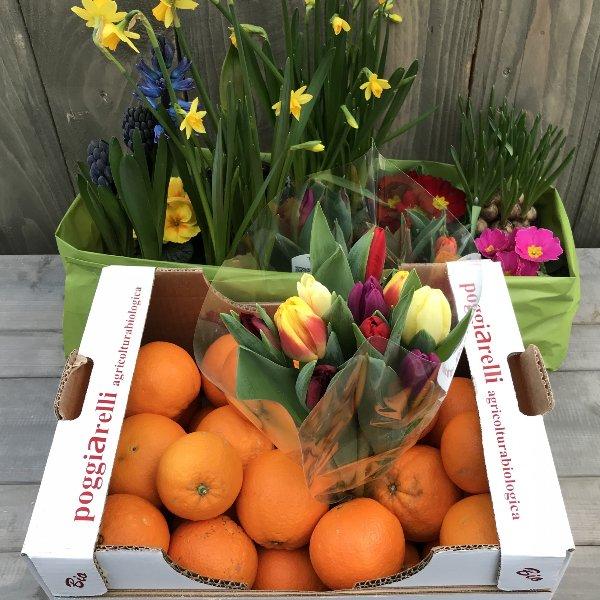 """Frühlingskiste """"Premium"""" mit BIO-Orangen und Tulpen Bild 1"""