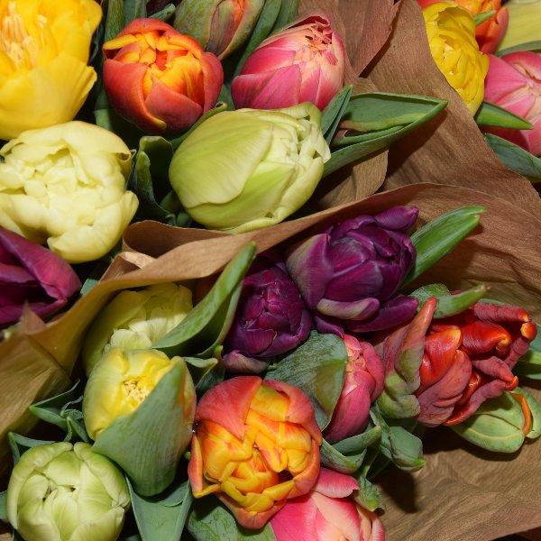 Bunte Tulpen Bild 1