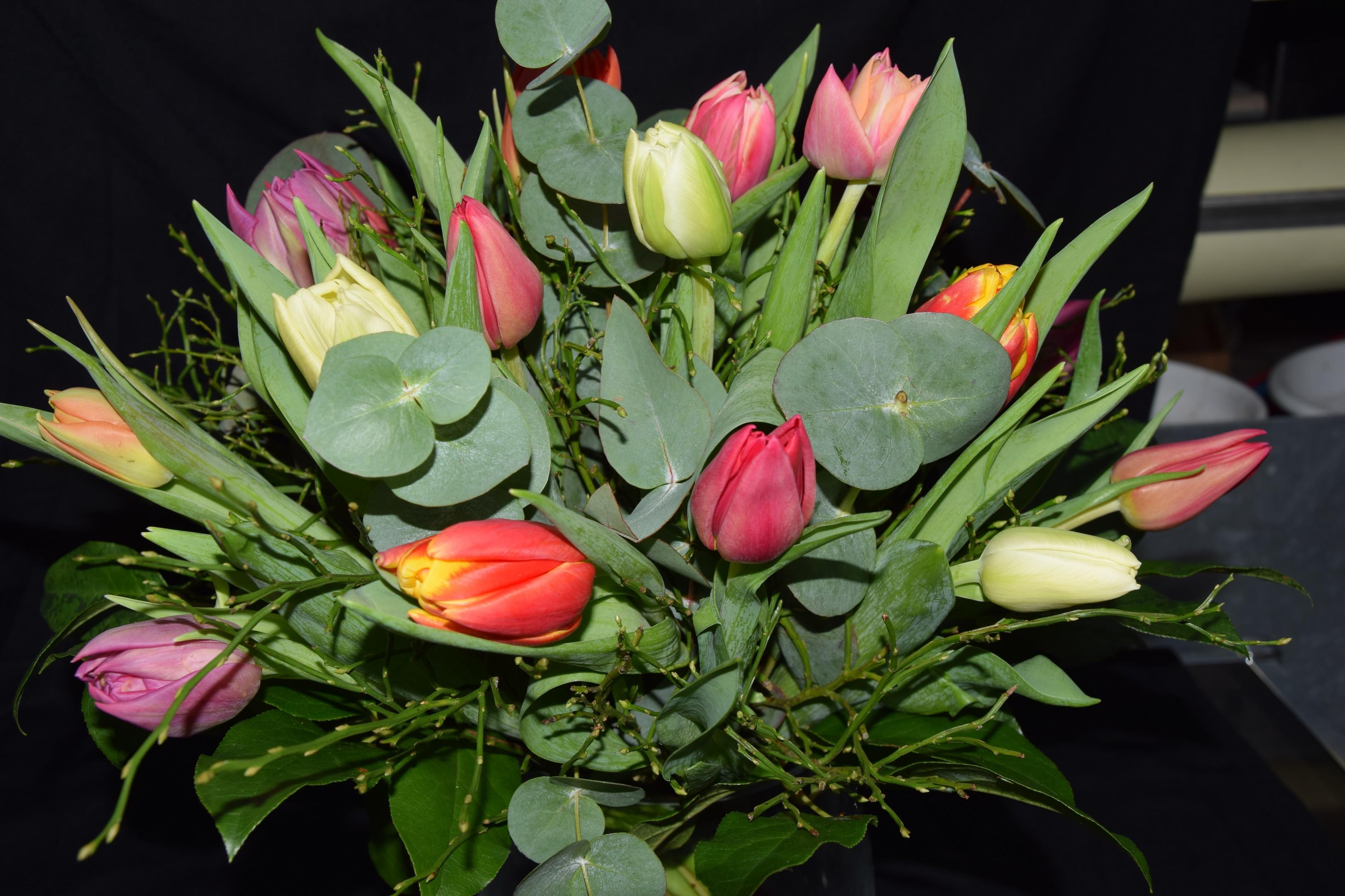 Bunte Tulpen Bild 2