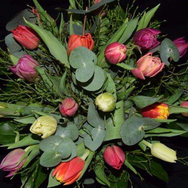 Bunte Tulpen Bild 3