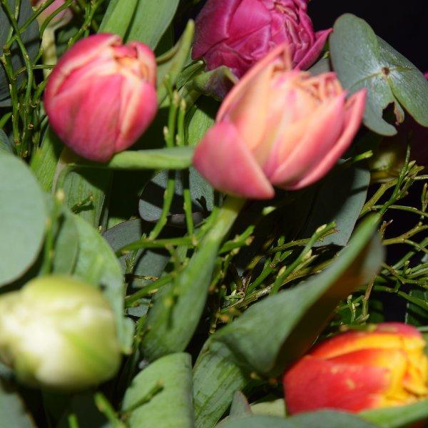 Bunte Tulpen Bild 4