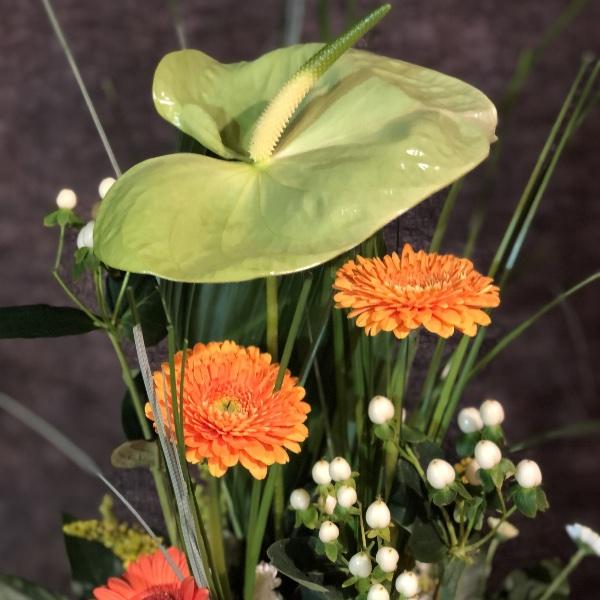 Blumen-Arrangement im Topf Bild 2