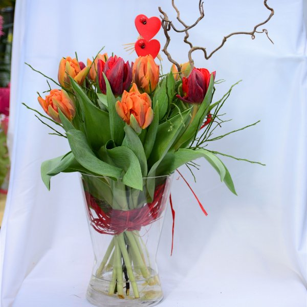 """Premium Tulpen """"A Dream"""" Bild 1"""