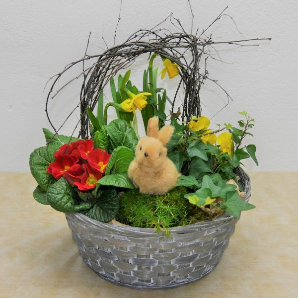 Frühlings- Schälchen Felix gepflanzt Bild 1