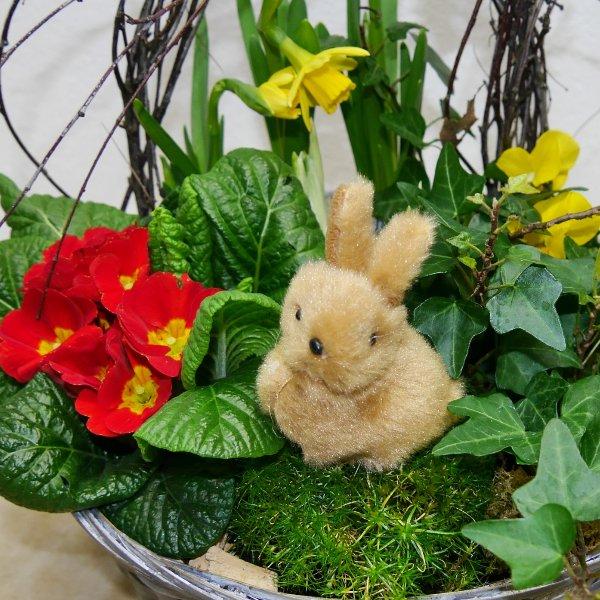 Frühlings- Schälchen Felix gepflanzt Bild 2