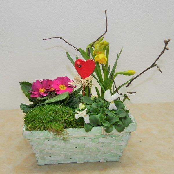 Valentinstags-Schälchen gepflanzt Kompakt Bild 1