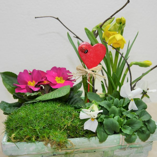 Valentinstags-Schälchen gepflanzt Kompakt Bild 2