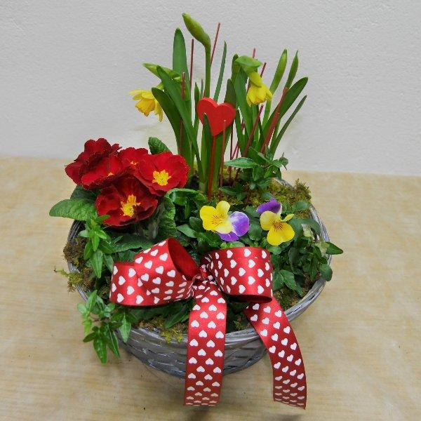 Valentinstags-Schälchen gepflanzt Mittel Bild 2