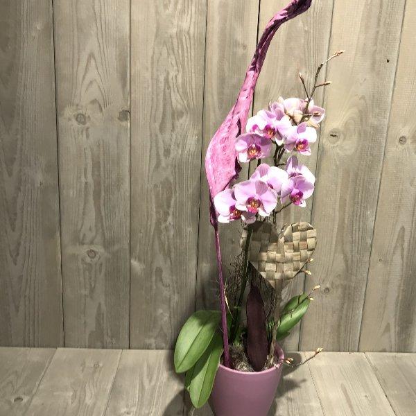 Orchidee mit Übertopf und Herz Bild 1