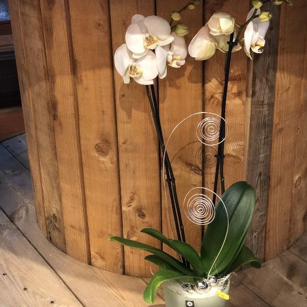 weiße Orchidee im Glas-Übertopf mit Deko Bild 1