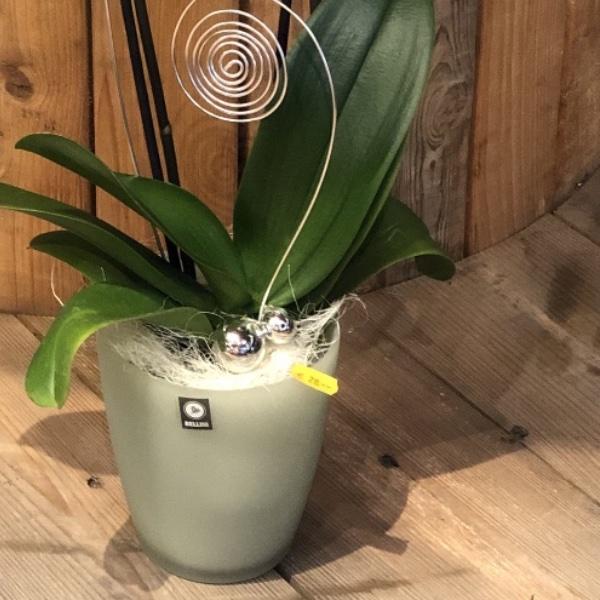 weiße Orchidee im Glas-Übertopf mit Deko Bild 2