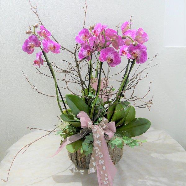 Orchidee Zauberhaft XXL Bild 1