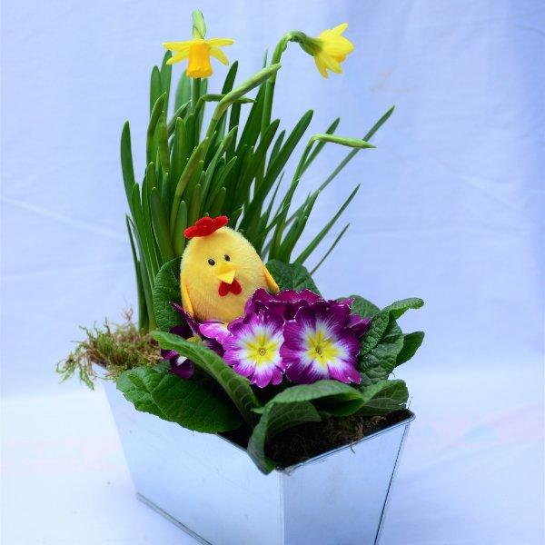 Frühlings- Schälchen Korbi gepflanzt Bild 1