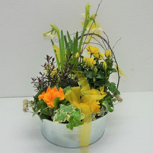Frühlings- Schälchen Ferdi gepflanzt Bild 1