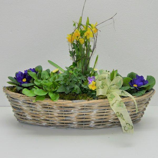Frühlings- Schälchen Lugge gepflanzt Bild 1