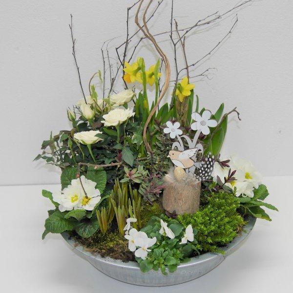 Frühlings- Schälchen Paule gepflanzt Bild 1
