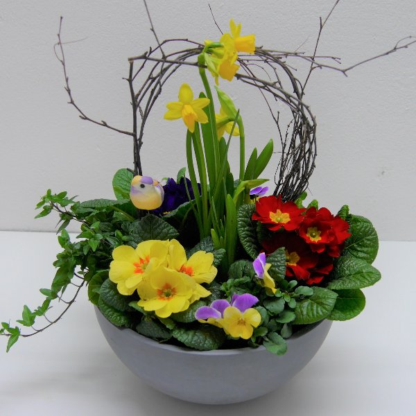 Frühlings- Schälchen Maxe gepflanzt Bild 1