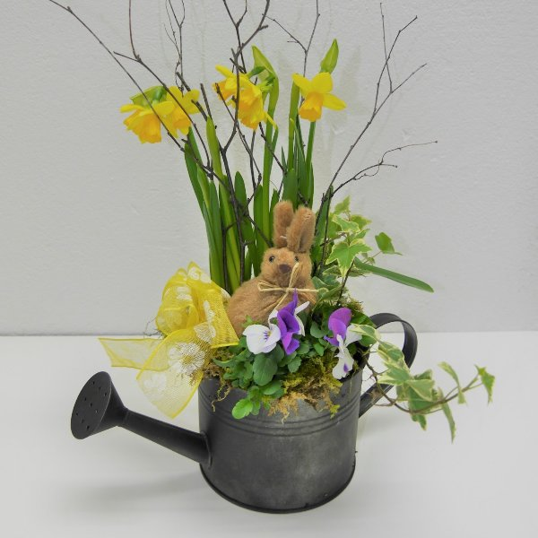 Frühlings- Schälchen Poldi gepflanzt Bild 1