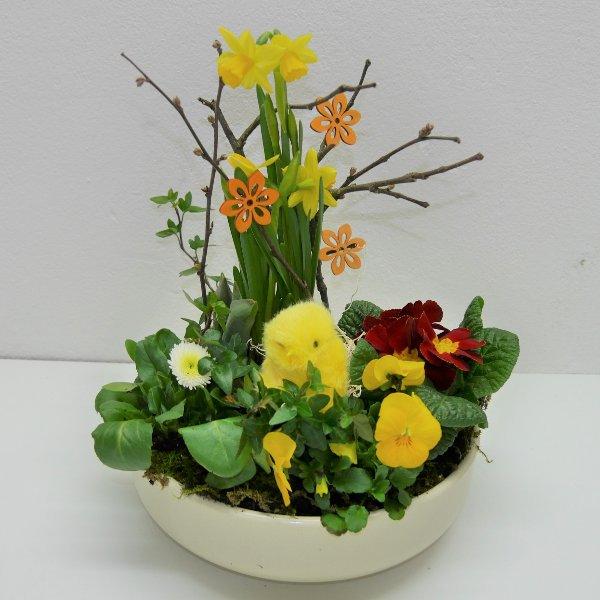Frühlings- Schälchen Basti gepflanzt Bild 1