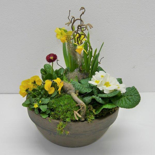 Frühlings- Schälchen Tone gepflanzt Bild 1