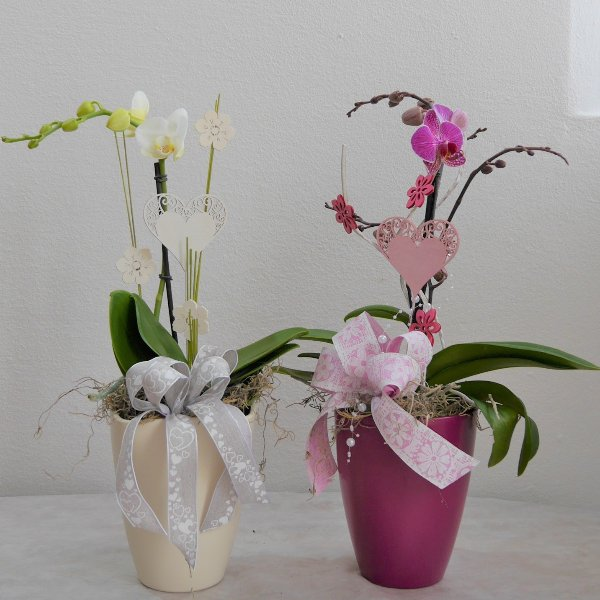 Orchidee 1 Risper aufdekoriert Bild 2